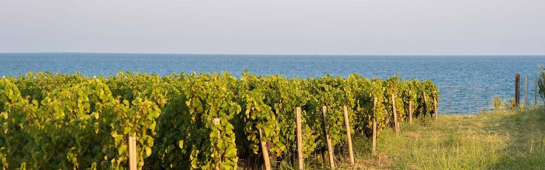 Librandi: vini dal cuore mediterraneo
