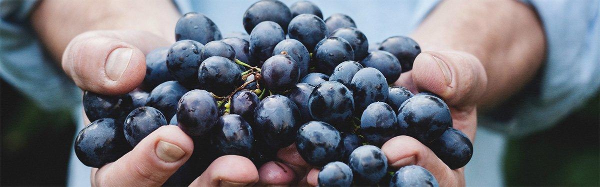 Alla scoperta dei vitigni