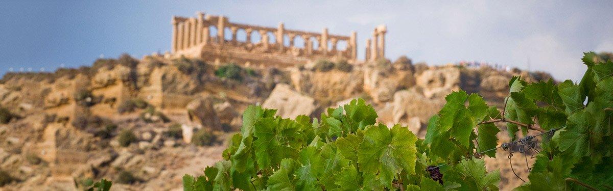 Greco: il più antico dei vitigni
