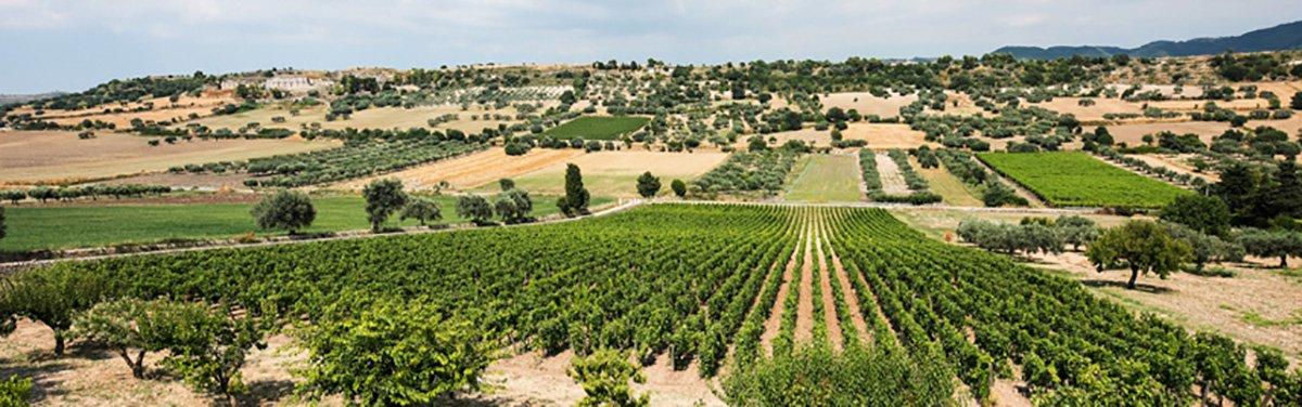 Gulfi: vini siciliani biologici