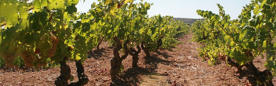 Argiolas: i vini sardi più famosi