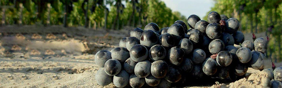 Carignano del Sulcis: la perla di Sardegna