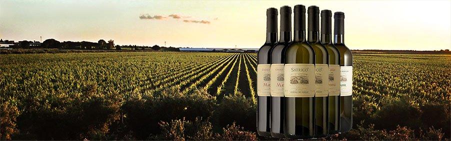 Casale del Giglio: grandi vini per tutti i giorni