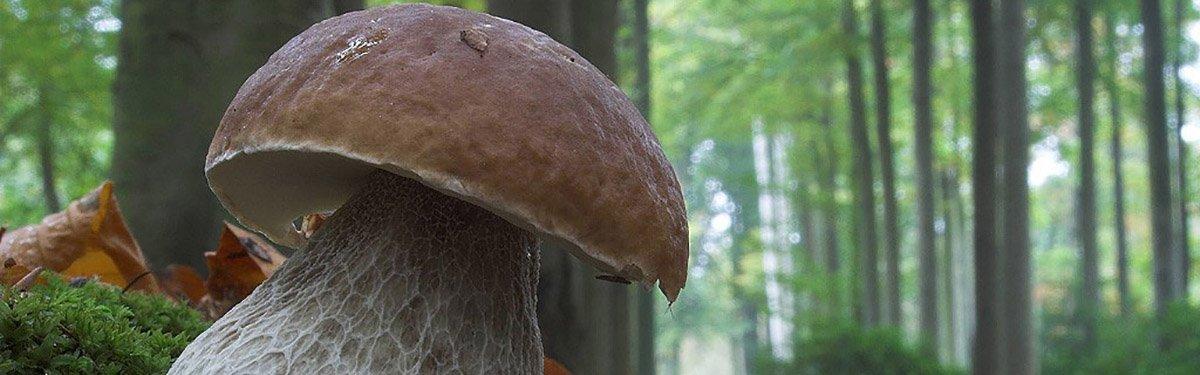 Funghi: un abbinamento delicato