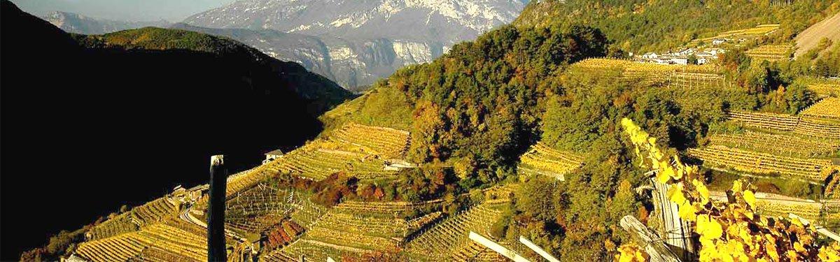 Maso Furli: vignaioli in Val di Cembra