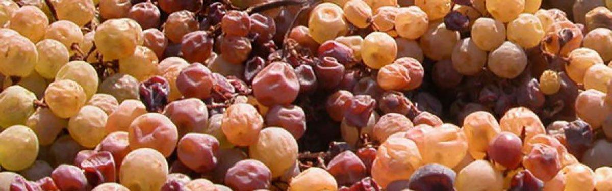 Dall'Amarone allo Zibibbo: come nascono i vini da uve appassite