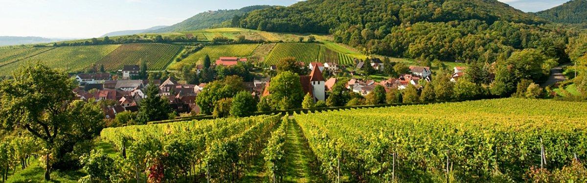 Pfalz: dove i Riesling sono più fruttati!