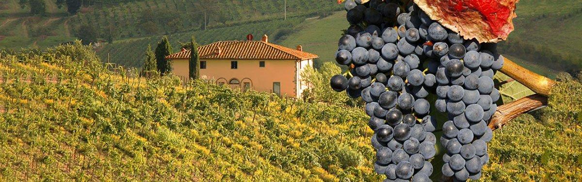 Sangiovese: il principe dei vitigni