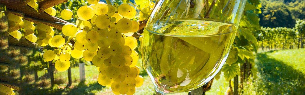 Sauvignon Blanc: l'irresistibile