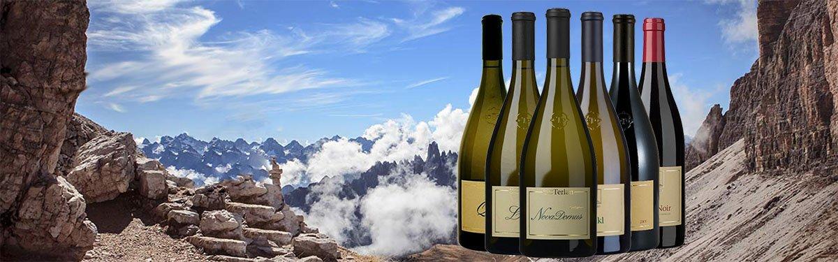Cantina Terlano: vini bianchi d'eccellenza