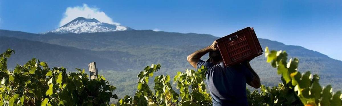Compra i vini dell'Etna Doc online al Prezzo Migliore su Vino.it! - Vino.it