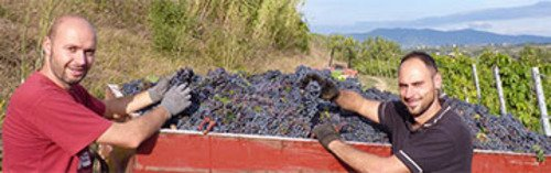 Acquista on line i vini di Dalle Nostre Mani