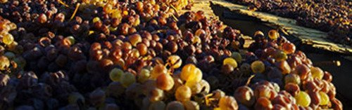 Acquista on line i vini di Florio