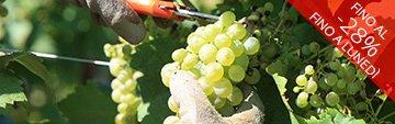 Acquista online il vino di Clelia Romano e  Colli di Lapio a prezzo speciale