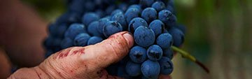 Acquista on line i vini di Barbera