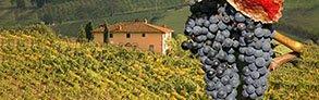 Acquista online i migliori vini Sangiovese  a prezzo speciale