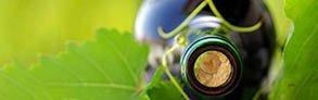 Acquista online i migliori vini bio a prezzo speciale